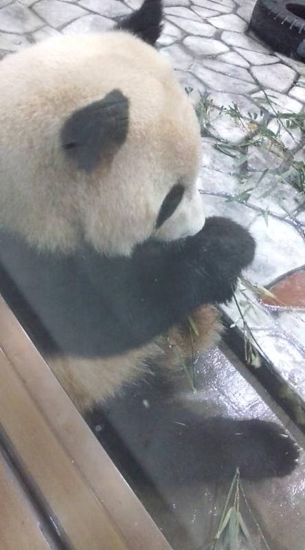 卯月パンダの画像