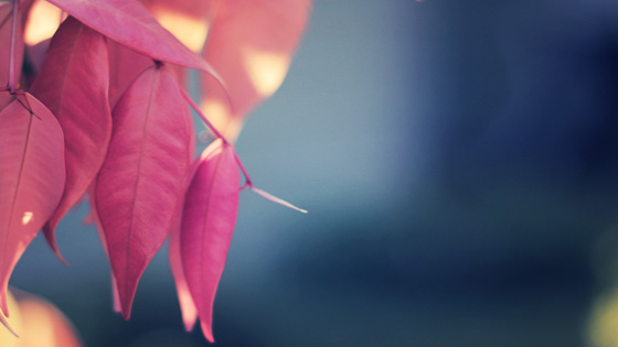 f:id:tanemori:20111002113851j:image