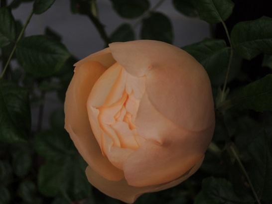 f:id:tangerinekun:20180306164430j:plain