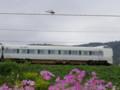 京都新聞写真コンテスト 赤トンボ