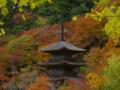 京都新聞写真コンテスト紅葉の金剛院