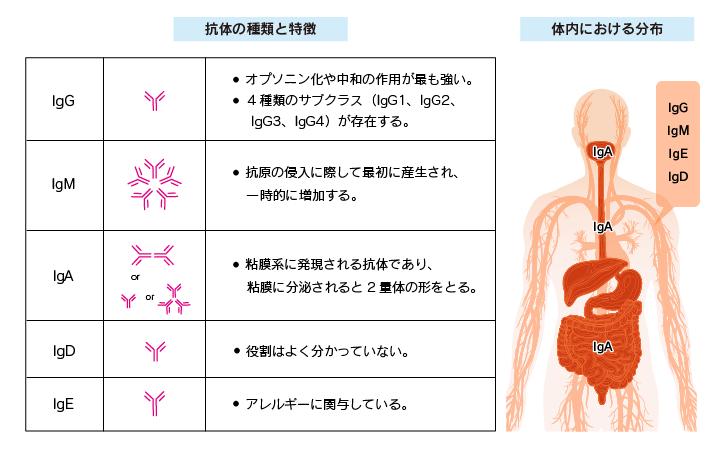 f:id:tanigawa:20200506154412p:plain