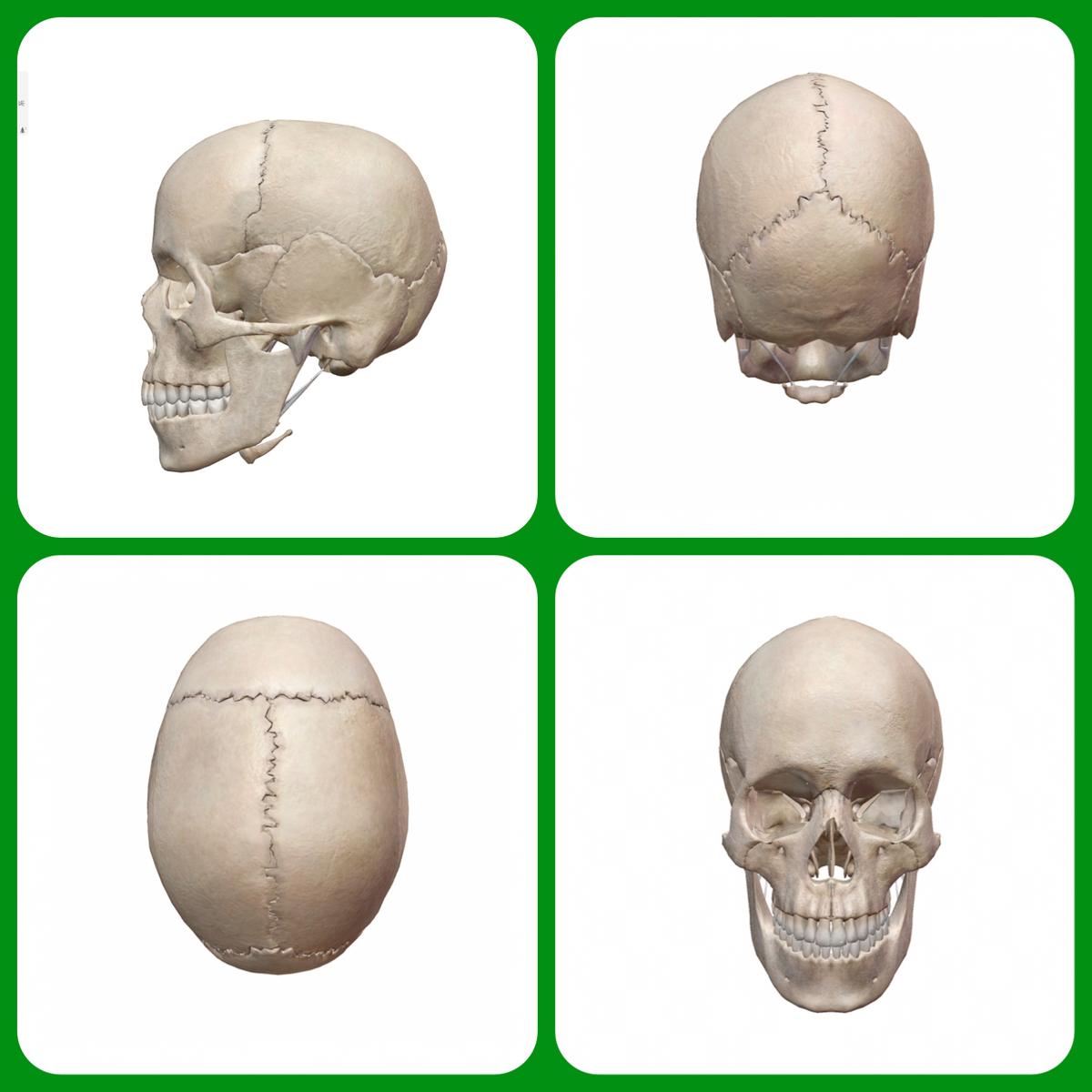 頭、頭蓋骨、足圧