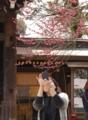 京都新聞写真コンテスト:スマホでパシャ