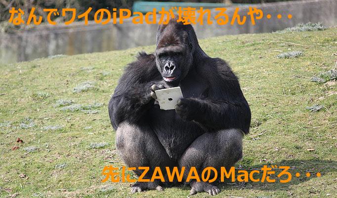 Gorilla92