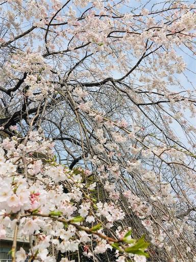 f:id:tanoshiirougo:20190403135505j:image