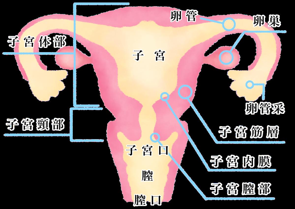 f:id:tanoshimu326:20200209222604p:plain
