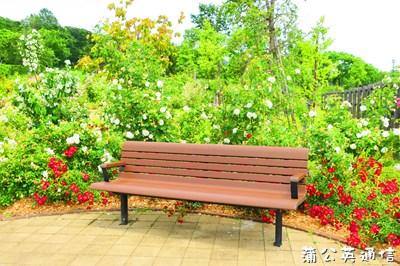 f:id:tanpopo-cafe:20160710210916j:plain