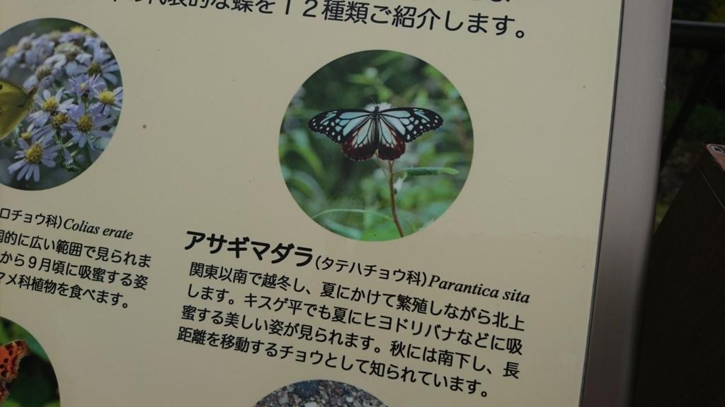f:id:tanpopotanpopo:20170710142740j:plain