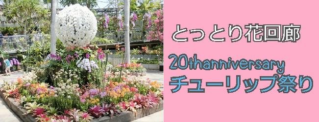 f:id:tanuki1221:20190711204736j:plain