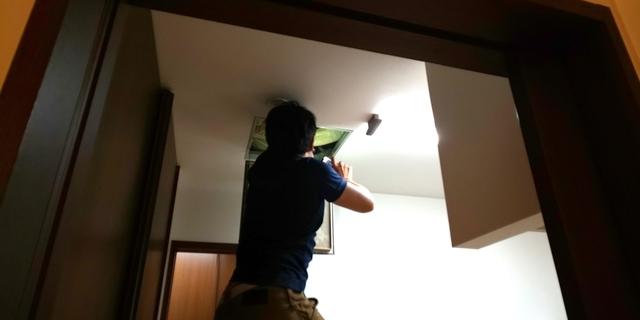 天井の上もコウモリの捜索