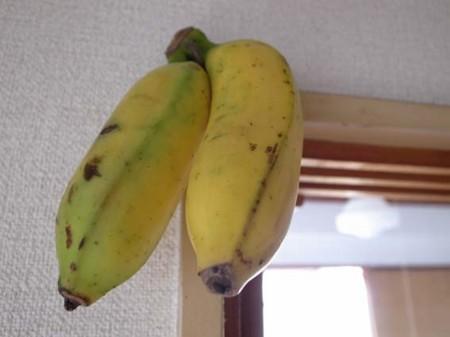 f:id:tapio:20100921161816j:image