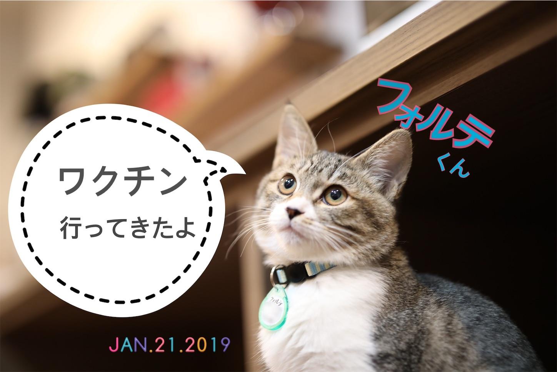 f:id:tapiokasan1090:20190121202921j:image