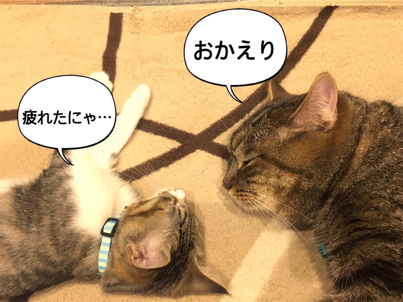 f:id:tapiokasan1090:20190121212940j:image
