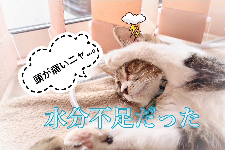 f:id:tapiokasan1090:20190129130643j:image