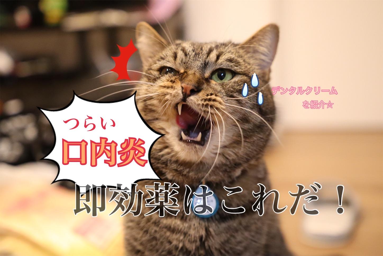 f:id:tapiokasan1090:20190218140242j:image