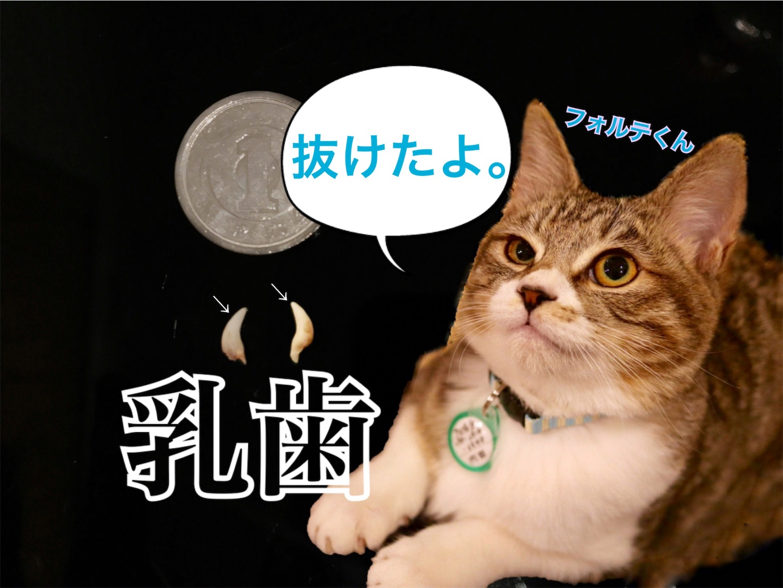 f:id:tapiokasan1090:20190228213737j:image