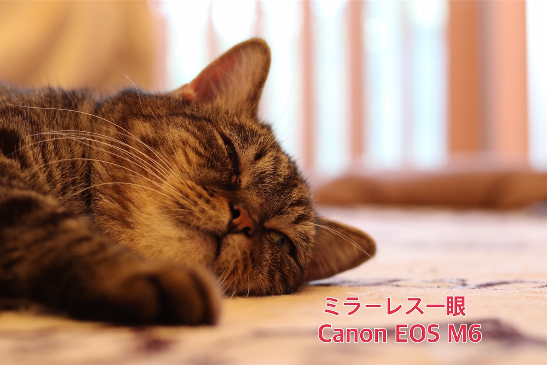 f:id:tapiokasan1090:20190926011157j:image