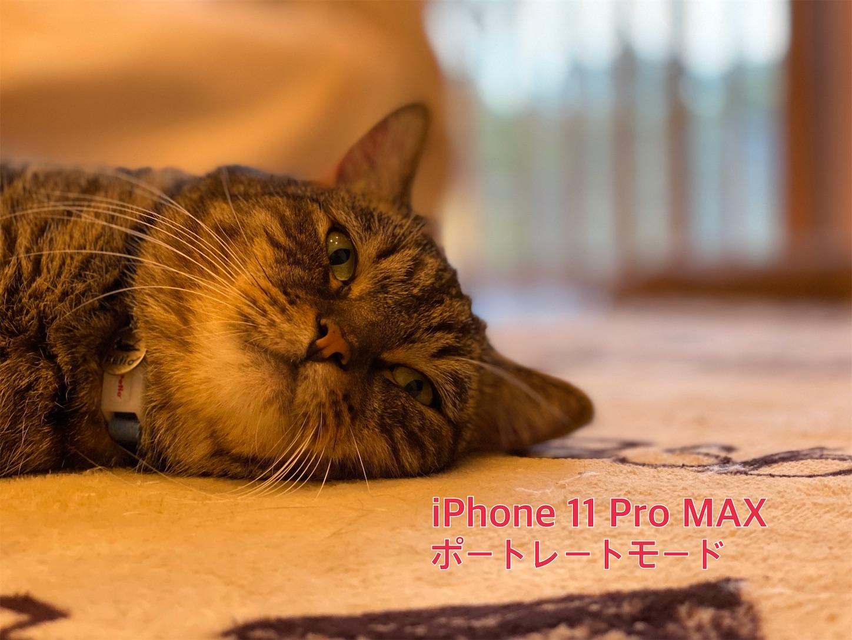 f:id:tapiokasan1090:20190926011205j:image