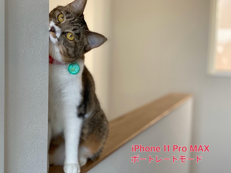 f:id:tapiokasan1090:20190926011228j:image