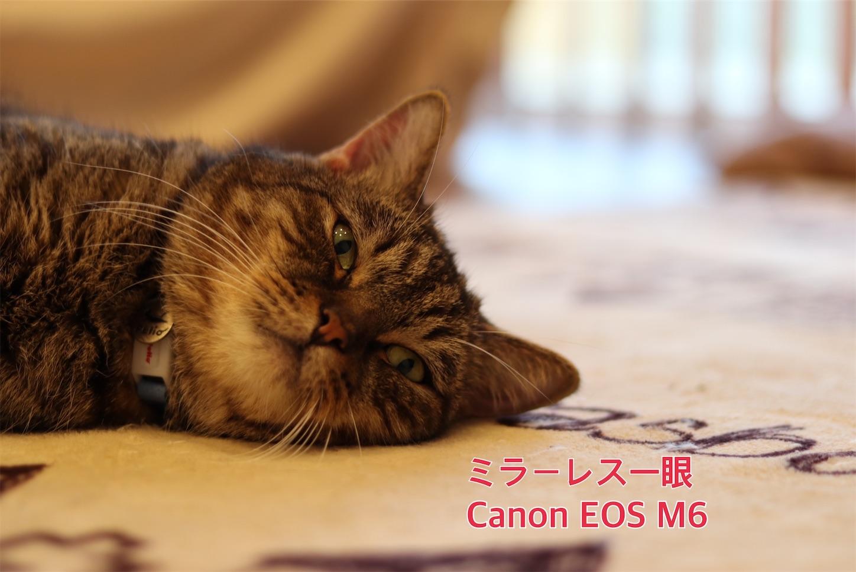f:id:tapiokasan1090:20190926011304j:image