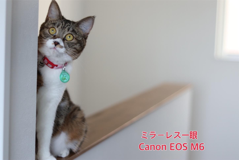 f:id:tapiokasan1090:20190926011308j:image