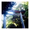 [walking]明治神宮