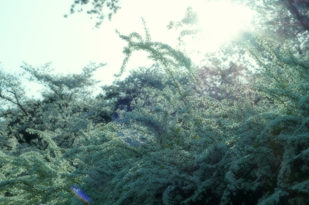 f:id:taroandjiro:20180401130052j:plain