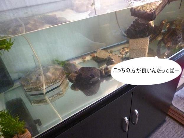 f:id:tarojiroko:20131227093520j:plain