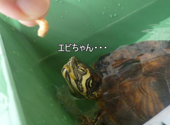 f:id:tarojiroko:20140724091458j:plain