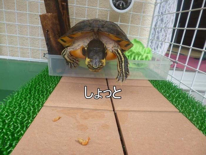 f:id:tarojiroko:20140724101416j:plain