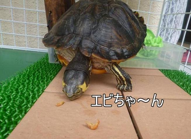 f:id:tarojiroko:20140724101423j:plain