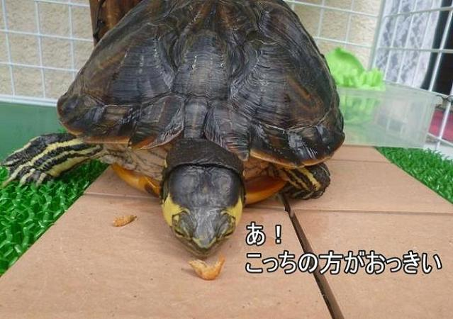 f:id:tarojiroko:20140724101426j:plain