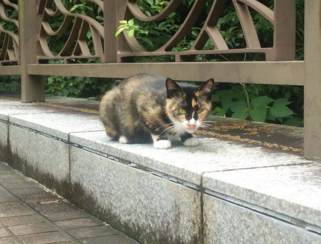 f:id:tarojiroko:20160621102152j:plain