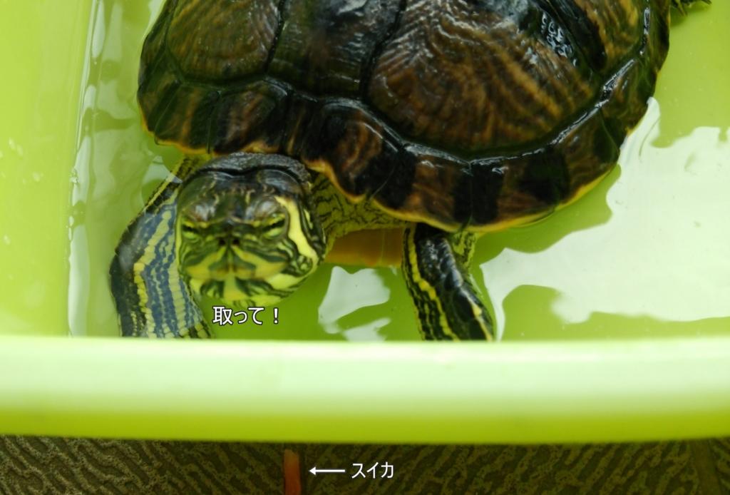 f:id:tarojiroko:20160816134711j:plain
