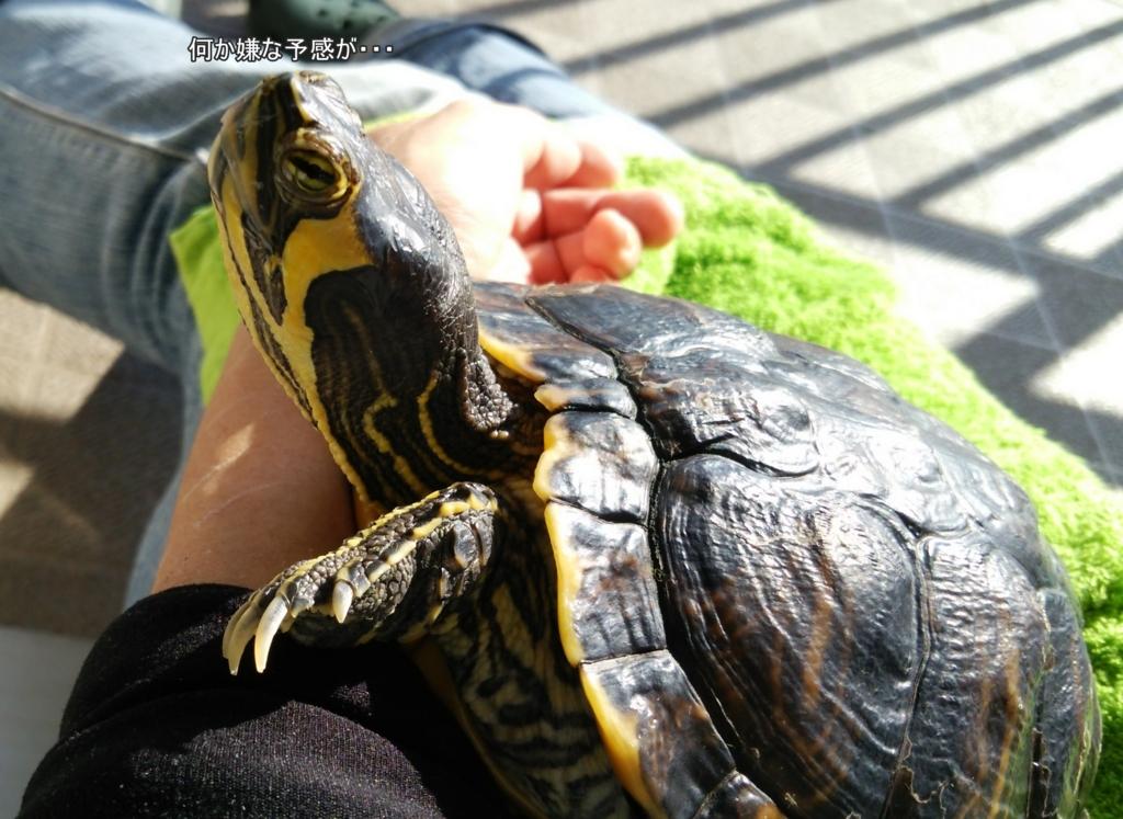 f:id:tarojiroko:20161107132520j:plain