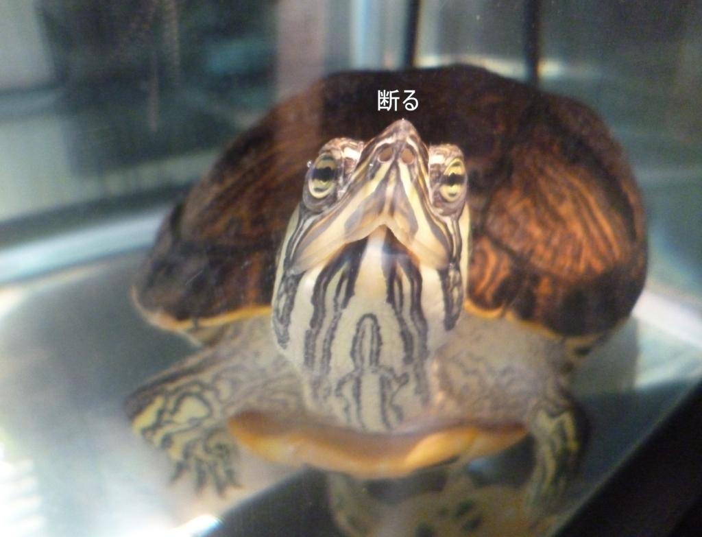 f:id:tarojiroko:20170117154524j:plain