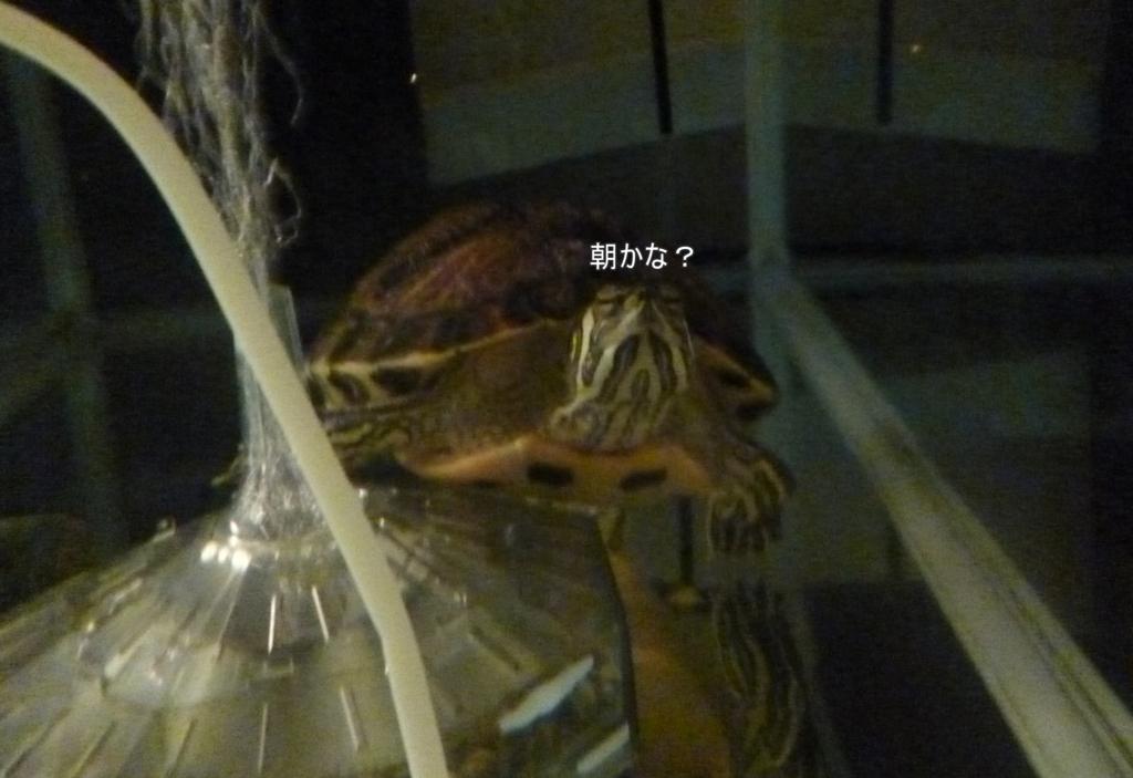 f:id:tarojiroko:20170125180644j:plain