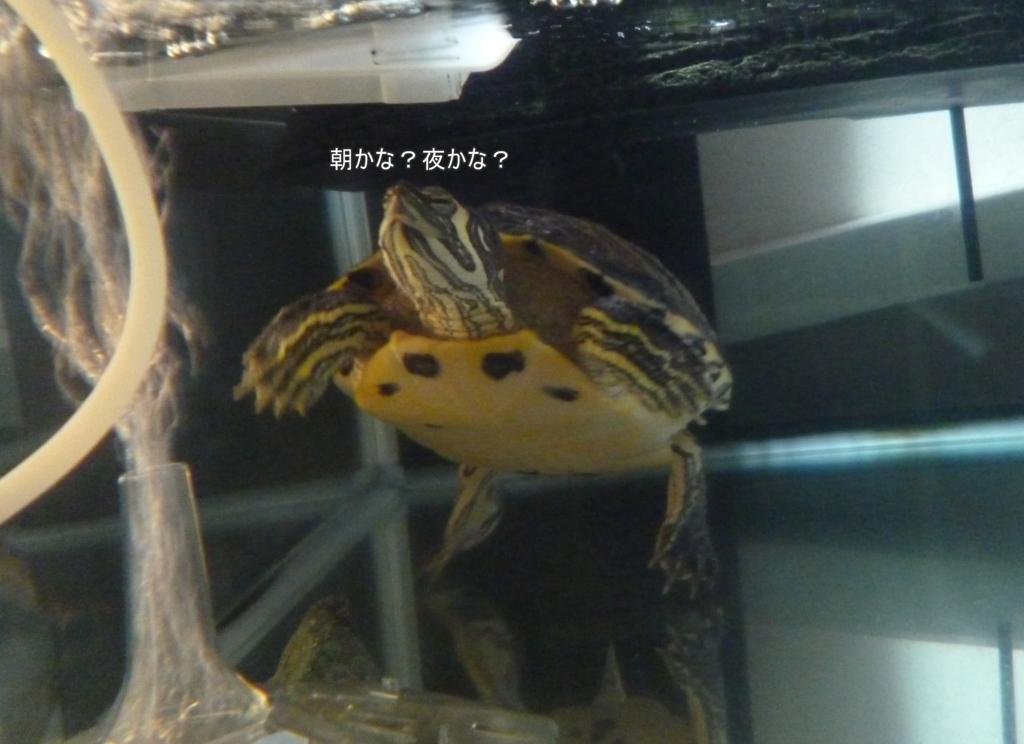 f:id:tarojiroko:20170126174008j:plain