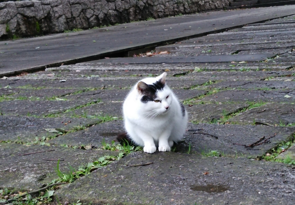 F:ID:tarojiroko:20170207110525j:平野