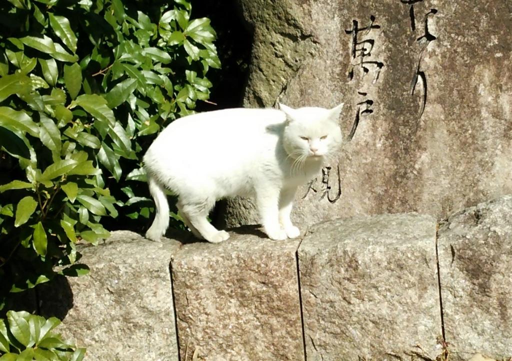 f:id:tarojiroko:20170213103912j:plain