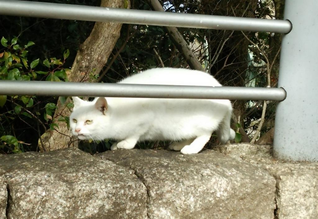 f:id:tarojiroko:20170224101234j:plain