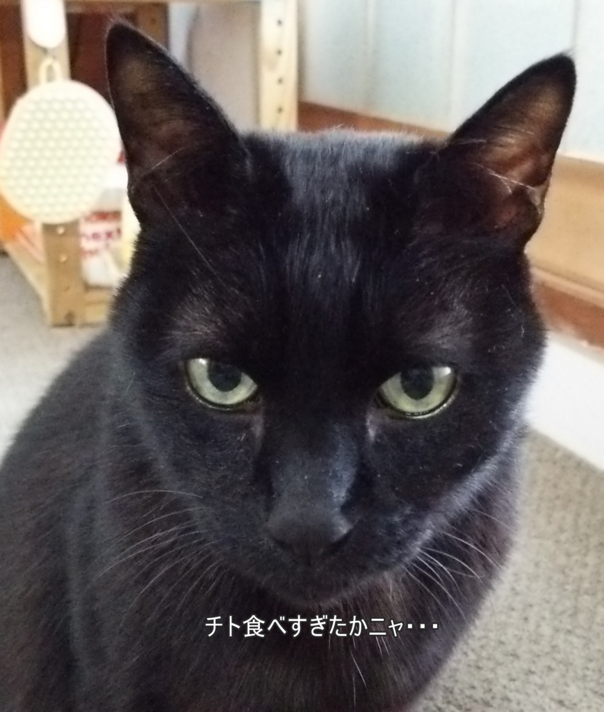 f:id:tarojiroko:20170328171500j:plain