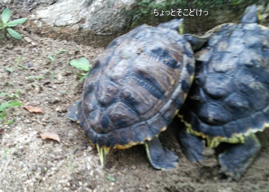 f:id:tarojiroko:20170707102128j:plain