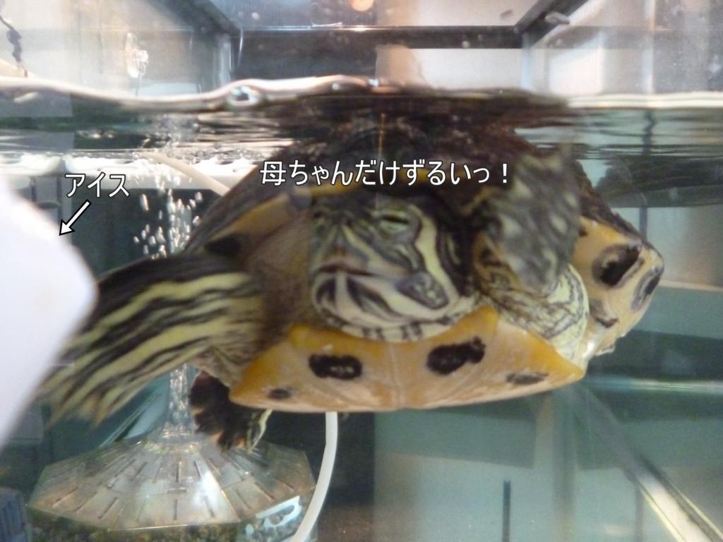 f:id:tarojiroko:20170711145147j:plain