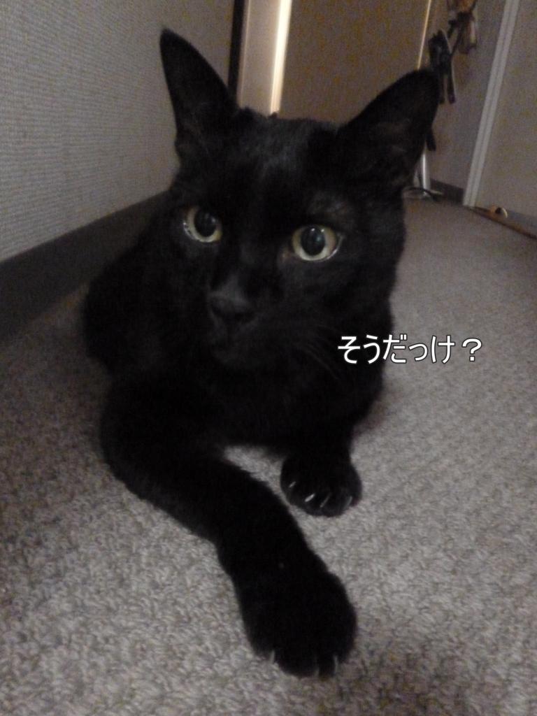 f:id:tarojiroko:20170727180636j:plain