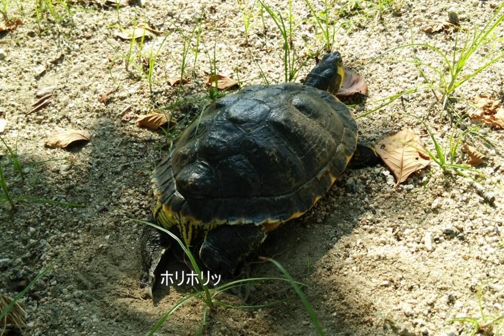 f:id:tarojiroko:20170829095159j:plain