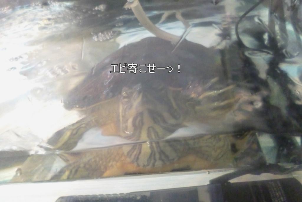 f:id:tarojiroko:20171116063826j:plain