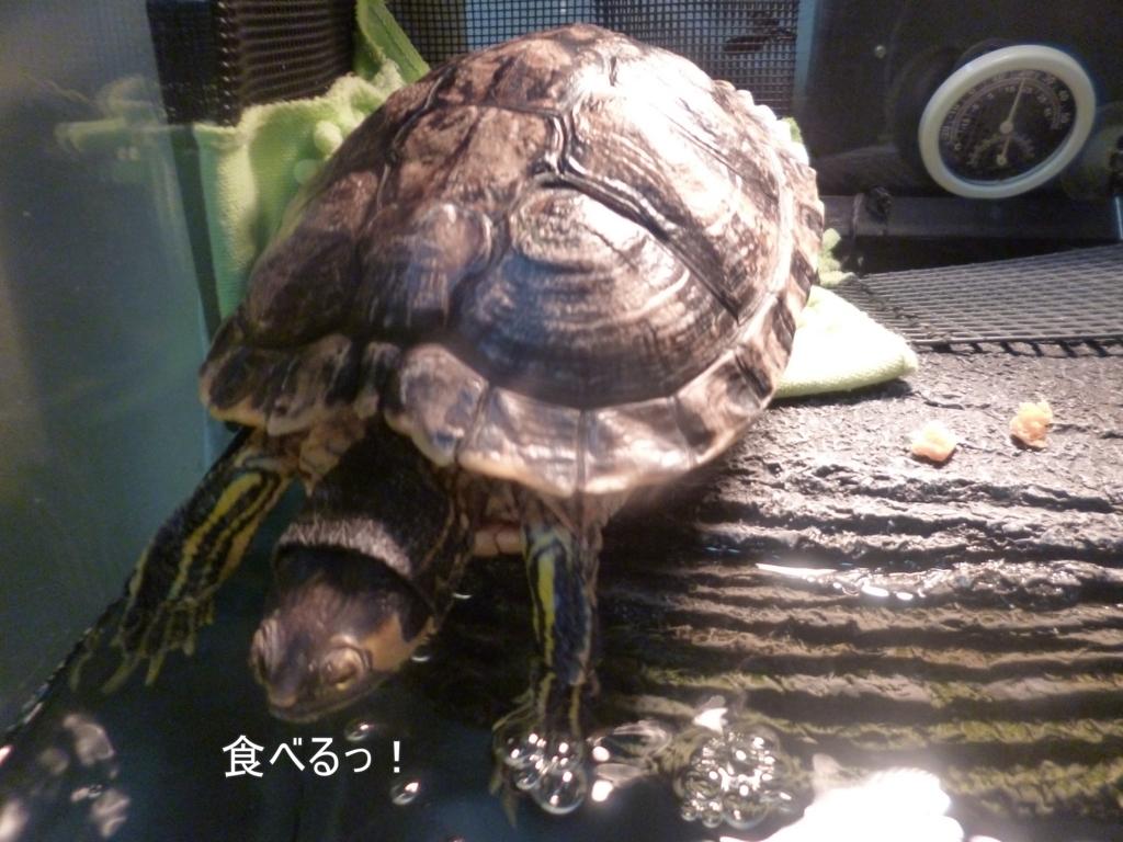 f:id:tarojiroko:20180109182516j:plain