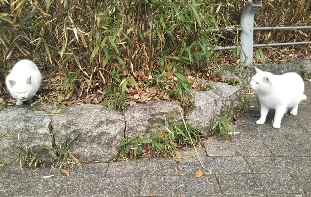 f:id:tarojiroko:20180125121213j:plain